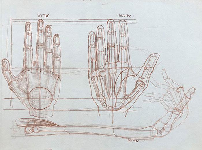 Nik Anikis Skušek: Roke XLVII, XLVIII, XLIX, 2013, anatomske risbe, serija Sto rok, akvarelni svinčnik na papir